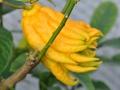 citrus_20201224_3