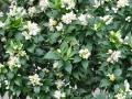 Garten_3_20