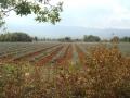 Provence_2014_6